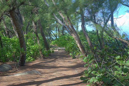 Остров Андрос Багамы AF1G/C6A
