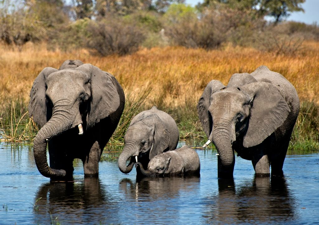 Ботсвана A25US