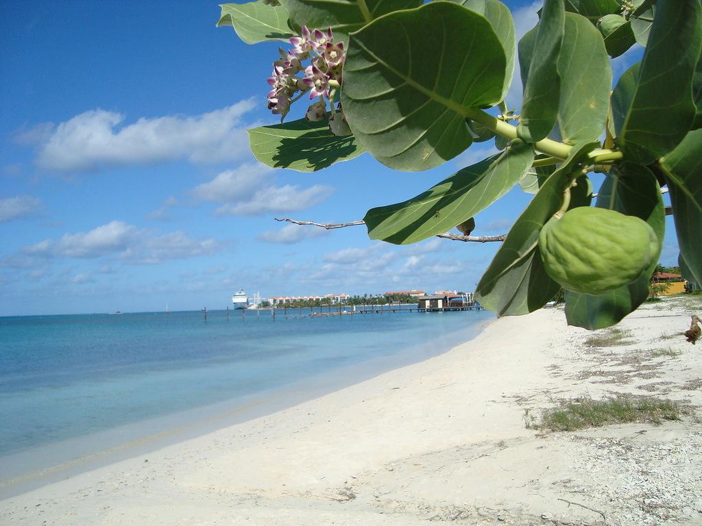 Curacao Island PJ2/K5JP PJ2/NT5V PJ2/W5BOS