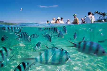 Now Fiji Is Known As The Best Place For Vacations Let S Discover Out Some Activities Its Vacation Places And Resorts In