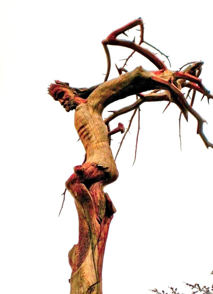 Ливан OD5/F5TLN Дерево Иисус Христос