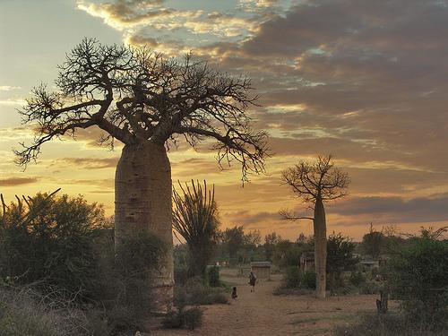 جمهورية مدغشقر