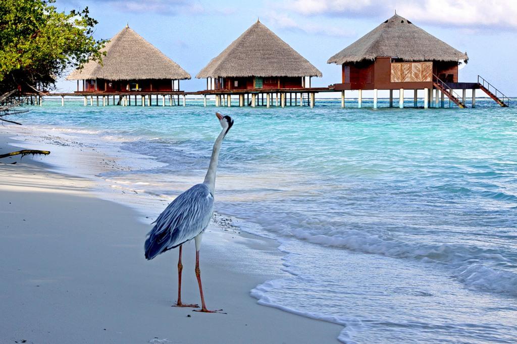 Мальдивские острова 8Q7HF 8Q7MH