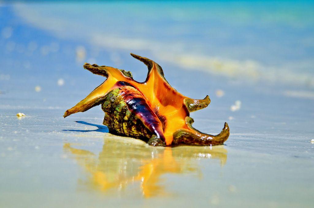 Мальдивские острова 8Q7EJ DX Новости