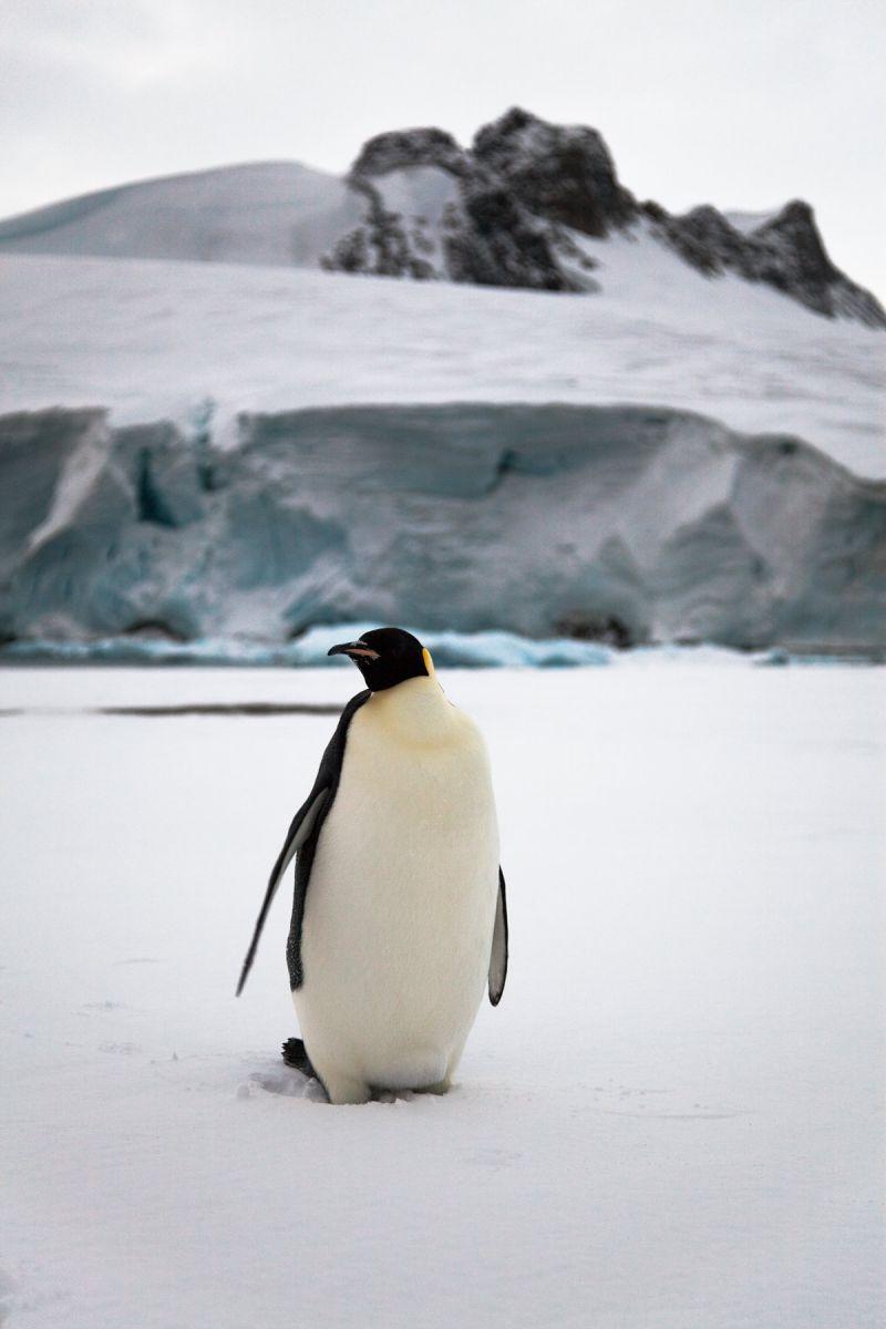 База Ротера Остров Аделаида Антарктида VP8ROT DX Новости