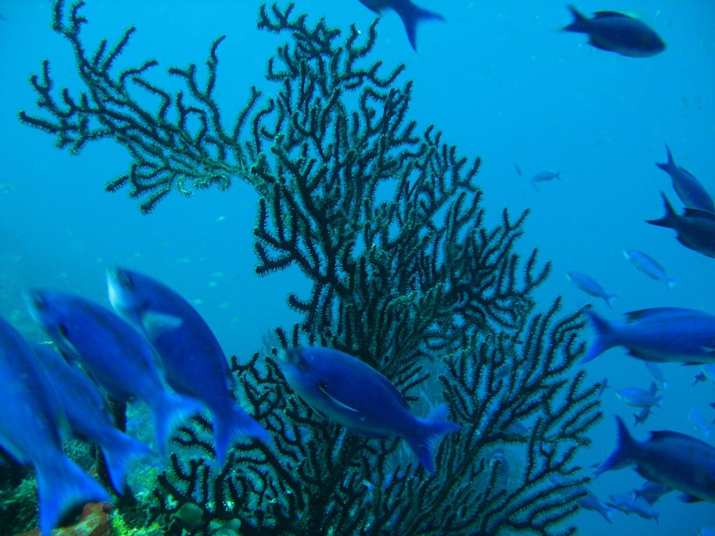 Saint Lucia Island J6BP