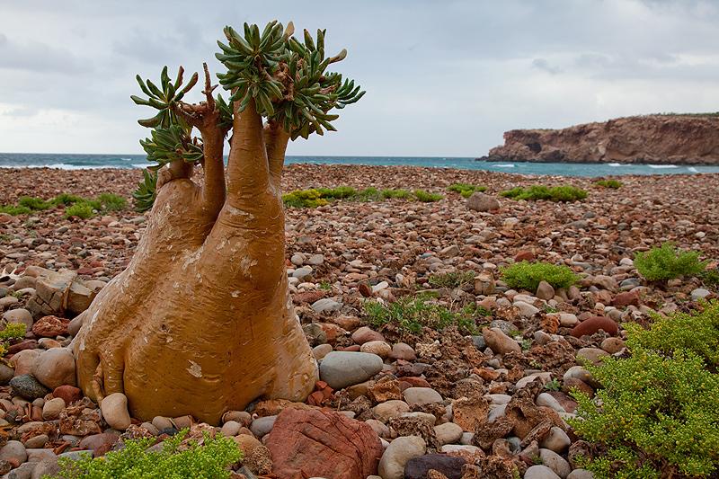 Sokotra-Island_Yemen_7O6_DX-News.jpg