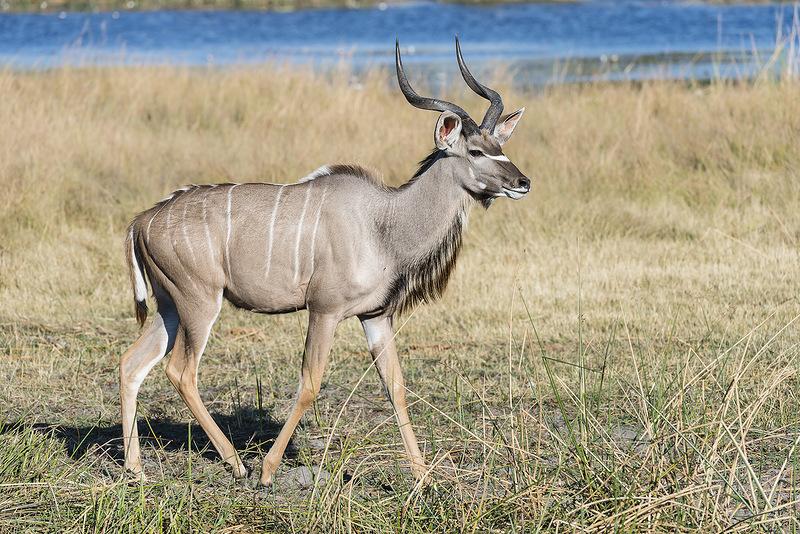 Южный Судан Z81R DX Новости